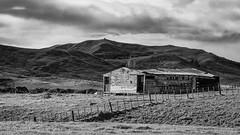 Better Days (David Recht) Tags: newzealand ocean beach sheep wool shed barn horse hawkesbay