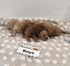 Gretta Boys 8-4