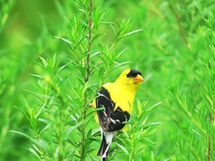 IMG_7174 (kennethkonica) Tags: nature birds animalplanet animal animaleyes autumn canonpowershot canon usa america midwest indianapolis indiana indy color outdoor wildlife