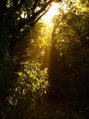 Heute Morgen im Garten (isajachevalier) Tags: landschaft licht strahlen garten natur morgen panasonicdmcfz150
