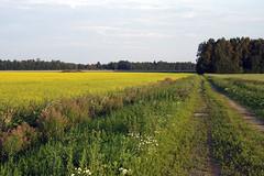 Põlluvahetee (Jaan Keinaste) Tags: pentax k3 pentaxk3 eesti estonia loodus nature põld field tee põlluvahetee road