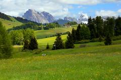 Alpe di Siusi (annalisabianchetti) Tags: mountains montagne dolomiti dolomites alps italy travel trentinoaltoadige green verde fields prati beautiful