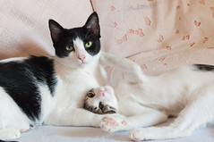Mother and son love (Roby90) Tags: cats gatti