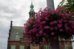 Kaasmarkt Flowers (Kallu Medeiros) Tags: kallumedeiros autochinon28mm128 auto chinon 2828 purmerend holland noordholland holanda nederland m42 lens sony alpha nex5 flower bloemen flôres kaasmarkt