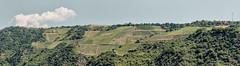 Rhine Vineyards (pni) Tags: panorama view landscape sky cloud vine rhein rhine valley pavement stgoar stgoarshausen ger18 germany deutschland pekkanikrus skrubu pni