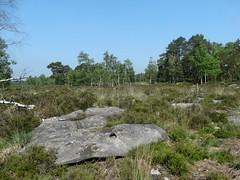 Les mares de platières (rockwolf) Tags: landscape heathland heath sandstone grès dallesdegrès lande bog tourbière lesmaresdeplatières valléedelagorgeauxarchers forêtdefontainebleau france 2018 rockwolf