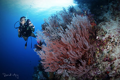 S O F T (Randi Ang) Tags: parigi moutong parigimoutong central sulawesi tengah sulteng indonesia underwater scuba diving dive photography wide angle wideangle randi ang canon eos 6d fisheye 15mm randiang
