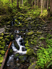 Happiness is a direction, not a place… (ferpectshotz) Tags: solducfalls waterfall rainforest solducriver olympicpeninsula pacificocean chasm pacificnorthwest hike trail cold summer water sky washington usa landscape nature olympicnationalpark pnw nw