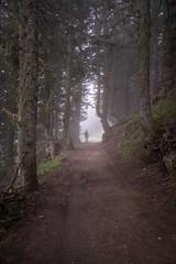 Pont d'Espagne (mrossmedia) Tags: tunnel france mist trees forest pines path trail hike mystery dark summer pontdeespagne