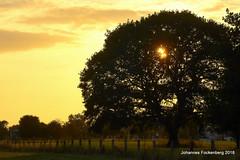 Baum mit Abendlicht (grafenhans) Tags: sony alpha 700 alpha700 a700 dslr tamron 2590 makro baum sonnenuntergang natur landschaft grafenwald bottrop nrw