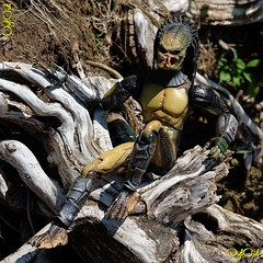 №559 (OylOul) Tags: oyloul 2018 q3 july 16 action figure hottoys predator
