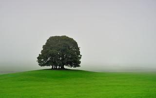 Curtain of mist