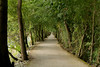 Chemin forestier (Zikindi) Tags: france loire borddeloire randonné à vélo canon 70d 24105mml
