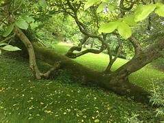 Tree - Cerney Gardens