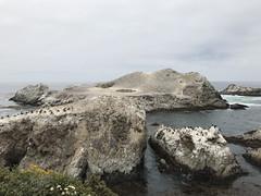 20180618_194328905_iOS (jimward85) Tags: pointlobos carmelbythesea montereybay california