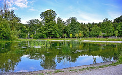 Reflets et verdure (Diegojack) Tags: lausanne vaud suisse d7200 paysages eau sauvabelin reflets verdure lac groupenuagesetciel
