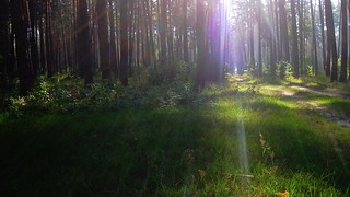 Sun rays in the forest. Ukraine.