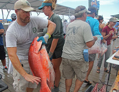 IMG_2914 (FWC Research) Tags: atlanticredsnapper redsnapper fisheriesdependentmonitoring snappersamplling