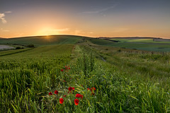 Paralells (Through Bri`s Lens) Tags: sussexdowns sompting poppies sunset field crop farm farmer brianspicer canon5dmk3 canon1635f4 lee09softgrad