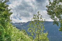 Pirineu. Andorra (Artal B.) Tags: andorra pirineu montaña árbol cielo nieve paisaje landscape mountain