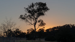 Sunset - Out in the Country (Merrillie) Tags: landscape sunset gumtree australia rural hill newsouthwales dusk trees country scenery tree cows acreage gresford farm twilight countryside property