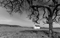Tree (1071) (Jorge Belim) Tags: canoneos50d pb 1022 flora paisagem árvore igreja