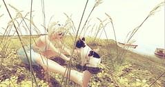 The Stare - By SamPoses (danaorianaor) Tags: samposes thestare avwnue blog dana pet dog scandalize zoneone blonde truth sea beach boat nature catwa catya maitreya avatar digital secondlife beauty flowers