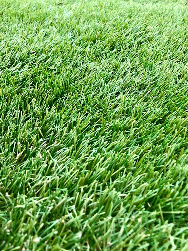 Just Green Grass