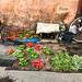 In the Kasbah neighbourhood of Old Marrakesh - Morocco 2017