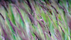 wind (andrew_efremov) Tags: tamron300mmf28 300mm sonya7m2