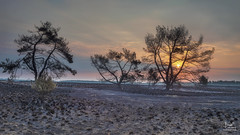 After the fire (dejongbram) Tags: landscape veluwe sunrise sun backlight trees tree fire gelderland nationalpark 845filter nikond500 nederland