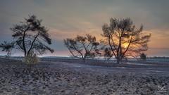 After the fire (Bram de Jong) Tags: landscape veluwe sunrise sun backlight trees tree fire gelderland nationalpark 845filter nikond500 nederland