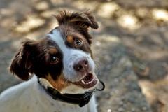 Babe (R.D. Gallardo) Tags: baby babe buru perro dog raw retrato animal canon eos 6d eos6d 50mm f14 portrait