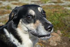 6-august-kotlugengi-sandfellsleid_028 (Stefán H. Kristinsson) Tags: sandfellsleið hundar dogs hiking reykjanes sandfell nikond800 tamron2875mm iceland ísland summer ágúst 2018 sunshine