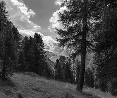 Val Rosim (giorgiorodano46) Tags: blackwhite agosto2018 august 2018 giorgiorodano iphone solda sulden sudtirolo altoadige valrosim stelvio stilfser parconazionaledellostelvio mountain landscape