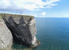 RSPB Fowlsheugh Nature Reserve, Crawton, August 2018 (allanmaciver) Tags: fowlsheugh nature reserve stonehaven crawton coast east water weather warm sunny cliffs caves birds clear allanmaciver rspb royal society protection