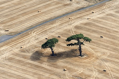 The Lost Trees (John D Fielding) Tags: trees oasis suffolk needhammarket field above aerial nikon d810 hires highresolution hirez highdefinition hidef britainfromtheair britainfromabove skyview aerialimage aerialphotography aerialimagesuk aerialview drone viewfromplane aerialengland britain johnfieldingaerialimages fullformat johnfieldingaerialimage johnfielding fromtheair fromthesky flyingover fullframe