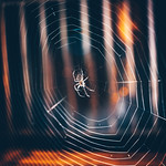 Spider #225/365 [Explored] thumbnail