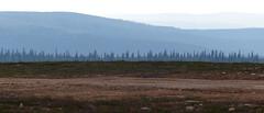 Fell landscape from the top of Kaunispää (Saariselkä, Inari, 20180714) (RainoL) Tags: 2018nf crainolampinen 2018 201807 20180714 fell finland fz200 geo:lat=6843346902 geo:lon=2744625092 geotagged inari july kaunispää landscape lapland lappi saariselkä summer fin