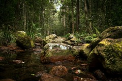 Faith, trust and pixie dust - Walt Disney. (Allieca Paterson) Tags: trees woods bush forest landscape australia qld amama amamour gympie queensland sunshinecoast