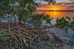 Hometown Mangroves (justenoughfocus) Tags: aurorahdr macphun palmetto skylumluminar bradenton florida hdr hdrphotography landscapephotography manateecounty manateeriver mangroves skylum unitedstates locations us