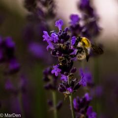 IMGP0682 (marden5377) Tags: exterieur jardin