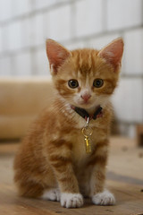 Hello, my name is Chanel.... People say I'm cute (JohannesMayr) Tags: cat cute süss