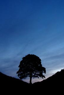 Sycamore Gap at dawn