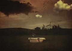 Untitled. (jcalveraphotography) Tags: selfportrait selfie serie surrealism creative conceptual conceptualimage dark dreams birds nature landscape 365 explore 365days exploration photographer photo picture fineart