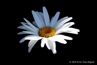 Flor en la oscuridad