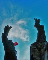 Anglų lietuvių žodynas. Žodis alive reiškia a 1) gyvas; žvalus; 2) budrus; 3) knibždąs; 4) tech. veikiąs, dirbąs; to keep alive palaikyti (gyvybę); no man alive niekas; any man alive kas nors; to be alive to aiškiai ką suprasti lietuviškai.