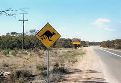 Musical Roo, Hattah, Australia (Paul Cook59) Tags: kangaroo music musical outback sign road country bush barren australia victoria roo