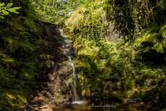 Limestone Brook, Rivington. (jonathancoombes) Tags: brook water waterfall trees wood forest explore nature widlfie bolton horwich rivingtonpike drought