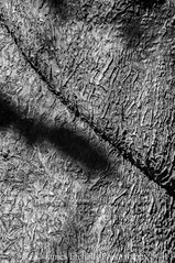 Line (James Etchells) Tags: macro infrared ir black white monochrome photography portrait shape structure surface texture nature natural world tree bark patterns pattern nikon sigma experiment